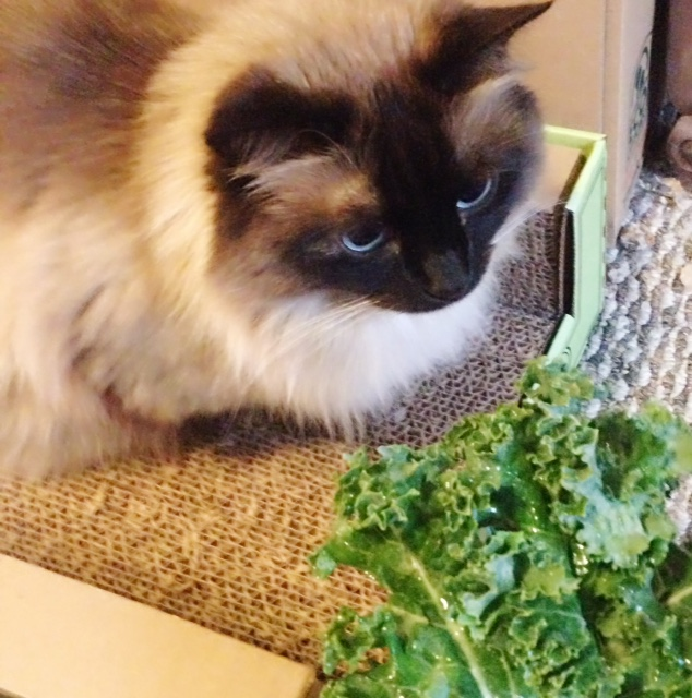Kale kitty